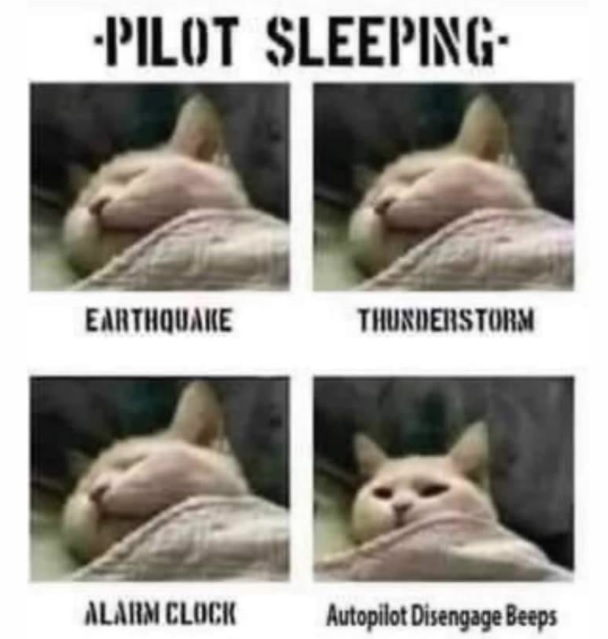 pilot sleeping.jpg